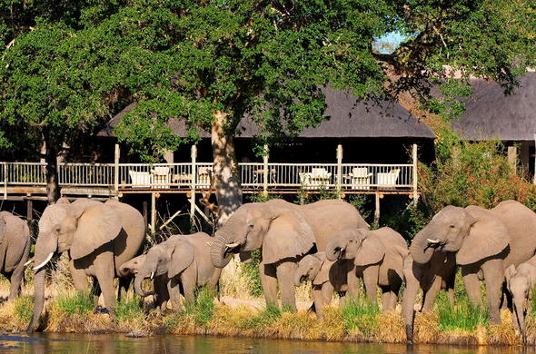 Elephants spotted in front of Sabi Sabi Bush Lodge.