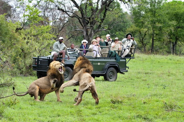 Photographic safaris in Sabi Sabi.