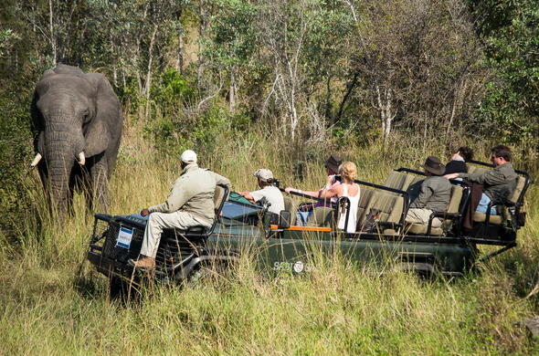 Track elephant on guided game drives.
