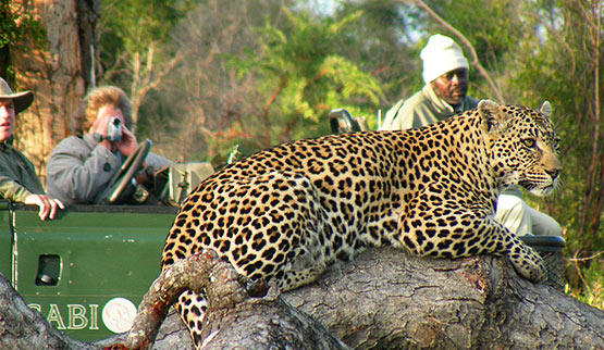 See Leopard while on a Sabi Sabi Game Reserve safari.